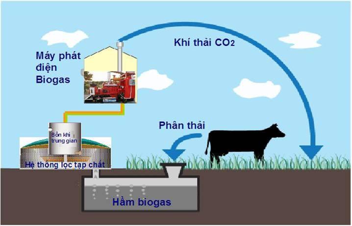 Xử lý nước thải chăn nuôi heo bằng hầm biogas mang đến lợi ích gì?